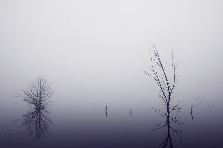 V mlze / In the fog #4