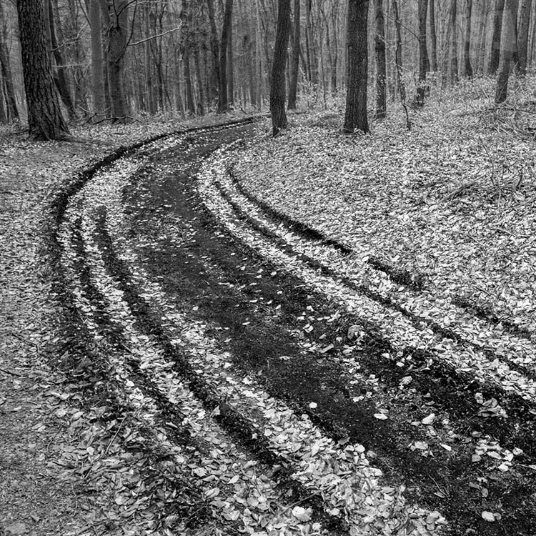 Cesta v lese / Path in the forest #1